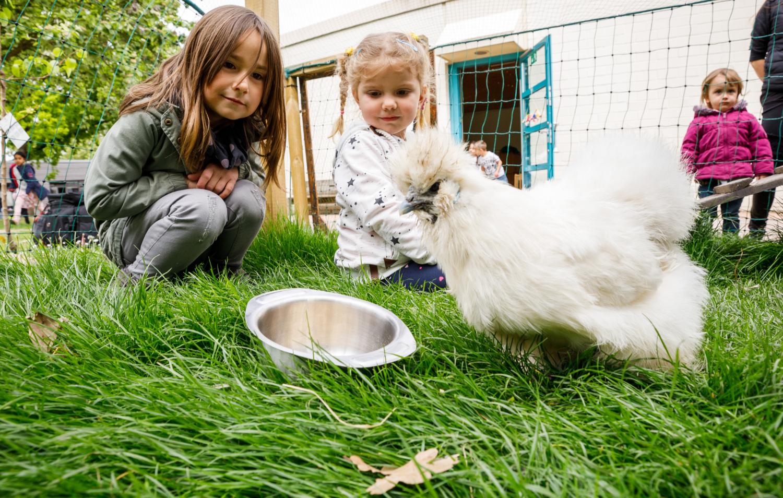 Kinder füttern ein Huhn
