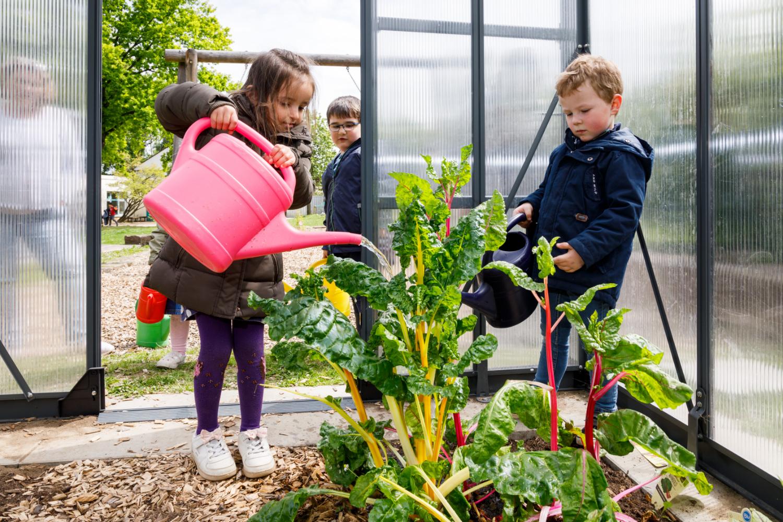 Kinder gießen Mangold